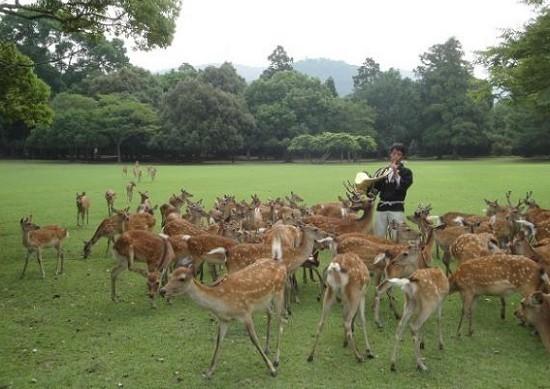 Deer Gathering at Nara Park