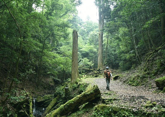Hiking Adventure in Mt. Kasuga Primeval Forest